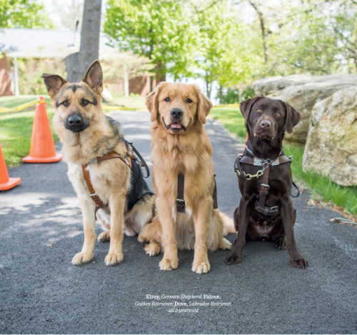 The Dogist Puppies 5-- bookspoils